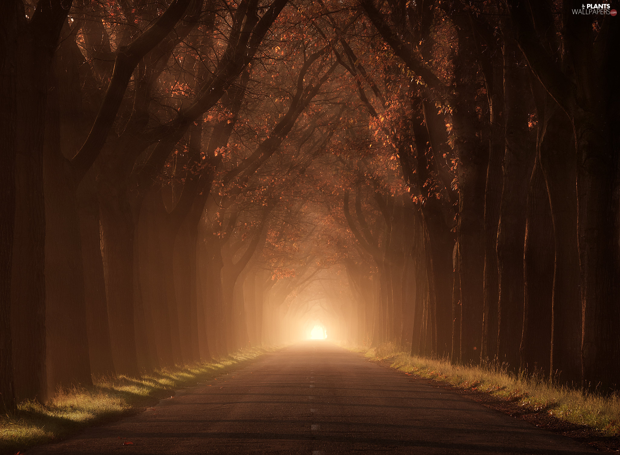 Fog, autumn, trees, Way, forest, illuminated, viewes
