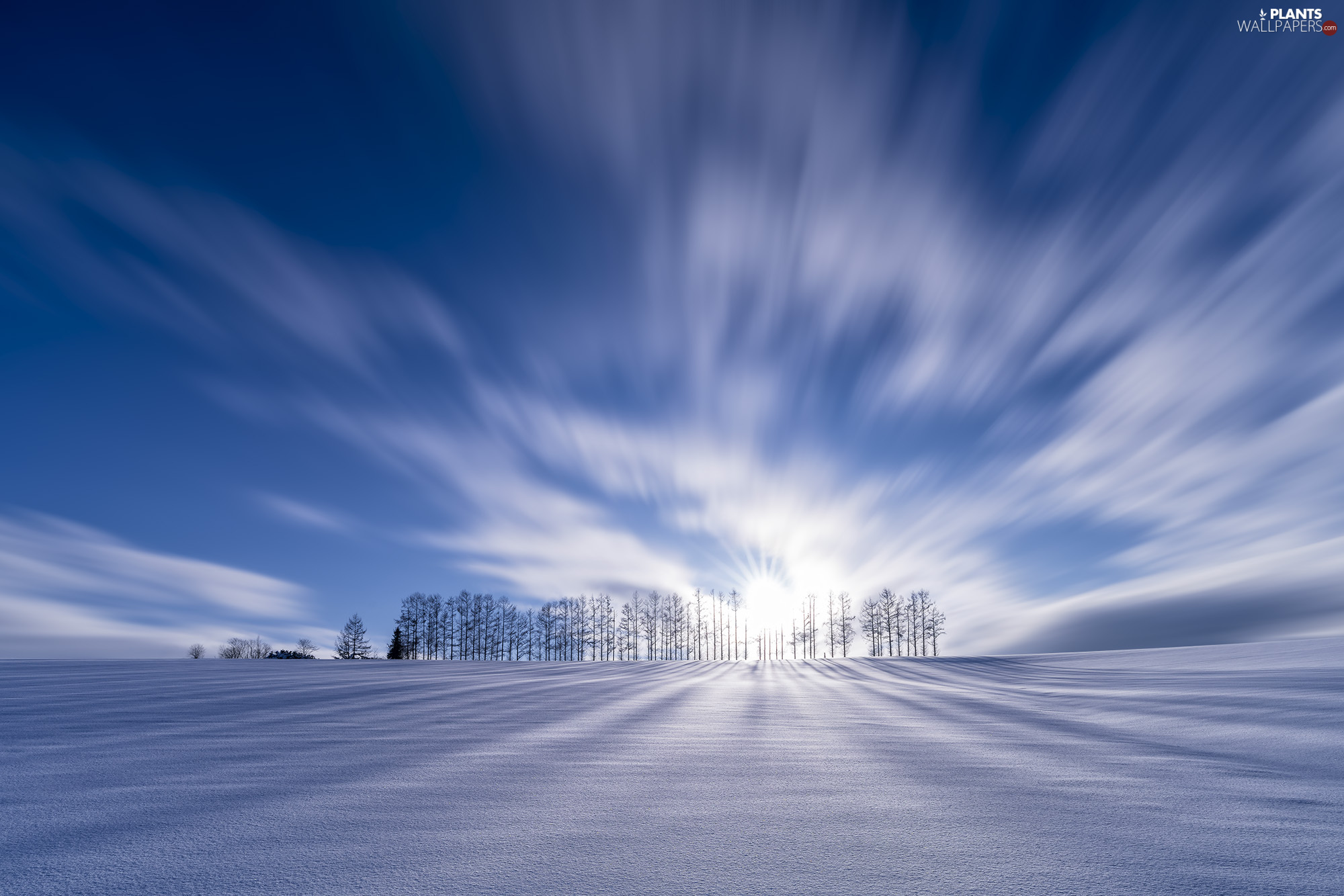 viewes, snowy, clouds, Field, fuzzy, trees, winter, rays of the Sun