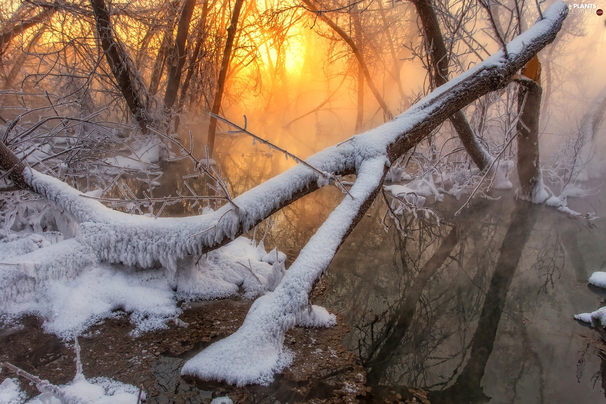 viewes, Great Sunsets, winter, trees, River