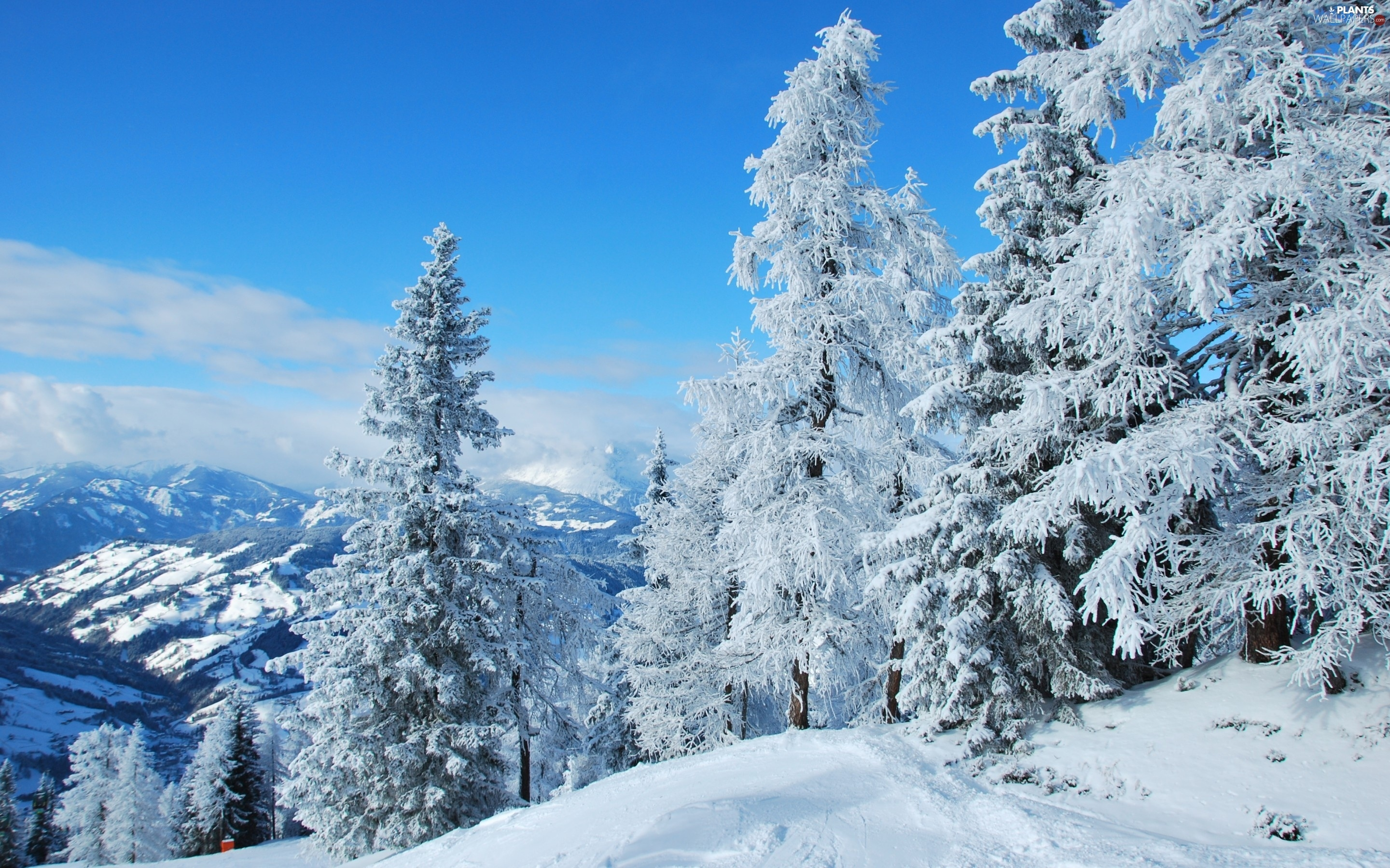trees, Mountains, winter, viewes