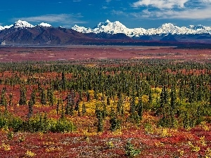 Mountains, Spruces, Alaska, plain