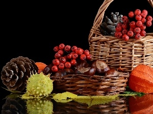 Baskets, Plant, harvest, cones, chestnuts, Autumn, composition
