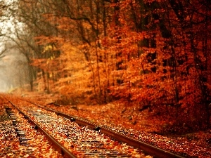 autumn, forest, ##, Leaf