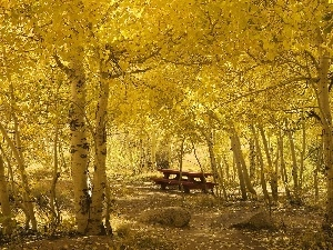 Park, Bench, autumn, birch