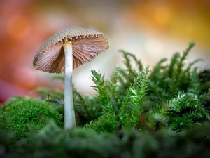 mushroom, color, background, Moss