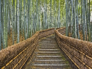 bamboo, Stairs, trees, viewes, forest