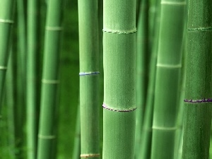 stems, bamboo