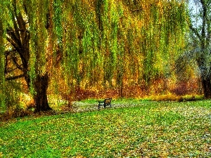 Bench, Willow, Crying