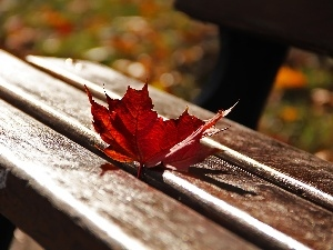 Bench, Red, leaf