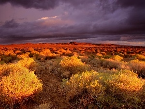 canyon, twilight, Bush, steppe