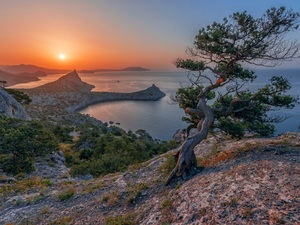 Great Sunsets, Mountains, pine, rocks, sea, trees, Bush