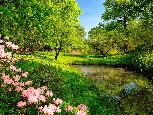 Bush, Meadow, trees, viewes, Pond - car, flower