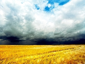 cereals, clouds, field