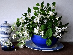 china, Twigs, jasmine