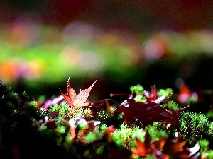 color, Moss, Close, Leaf