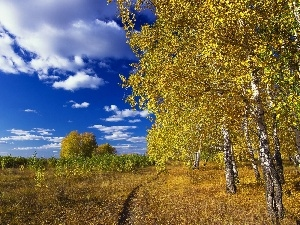 autumn, Path, clouds, birch