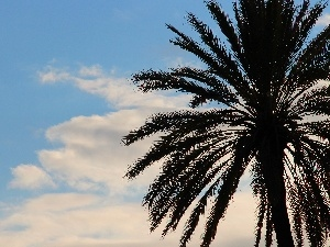 Palm, azure, clouds, Sky