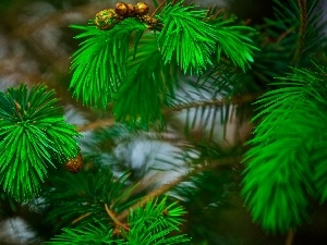 trees, pine, conifer, Twigs