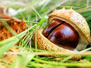 chestnut, skin, grass, cracked