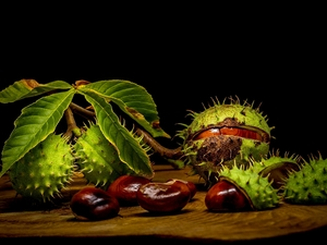Leaf, chestnut, parings, Dark Background, chestnuts, twig