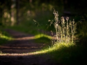 grass, ##, Forest, Path
