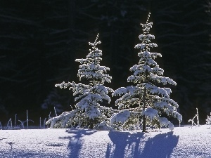 forest, Christmas, snow