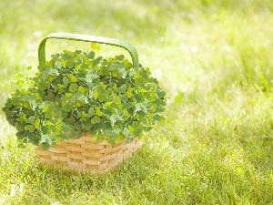 Clovers, basket, four-leaf