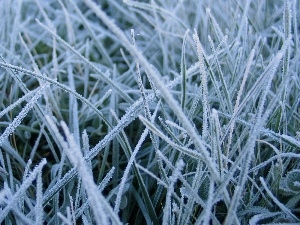 grass, White frost