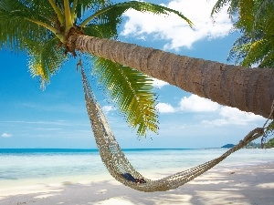 Glasses, Book, Palm, Hammock, Beaches