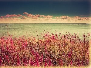 grass, clouds, sea
