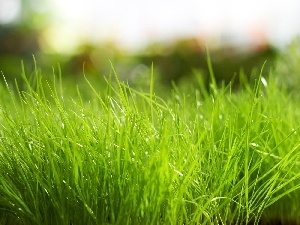 grass, Green, Thick