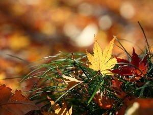 Leaf, color, Autumn