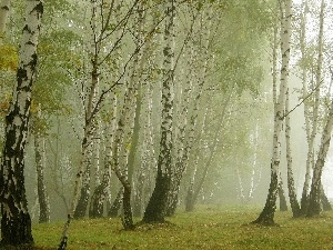 Leaf, autumn, birch, Fog, forest