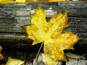 leaf, Yellow, Autumn