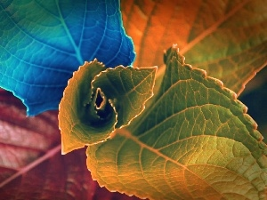 color, Leaf