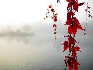 Fog, Red, Leaf, lake
