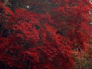 trees, Red, Leaf, viewes