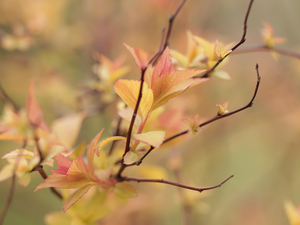 Leaf, Spiraea, Twigs