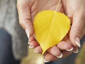 leaf, hands, Yellow