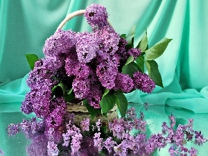 lilac, bouquet, purple