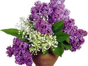 bouquet, purple, Lilacs, white