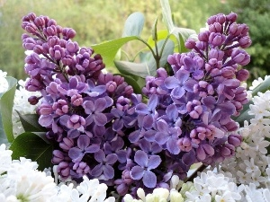 bouquet, Lilacs