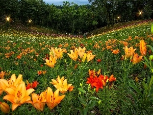 lily, tracts, Colorful