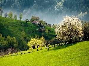 woods, Mountains, medows, Houses, country, Slovenia, trees, viewes, flourishing