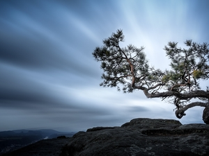 mount, Saxon Switzerland National Park, trees, Sky, Germany, Lilienstein Mountain, pine