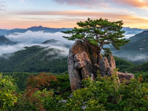 Rocks, trees, Fog, Mountains, pine, viewes