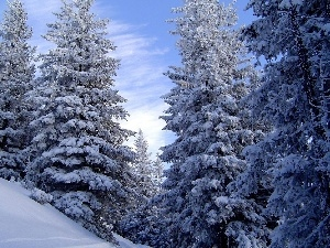 mountains, winter, trees, viewes, Snowy