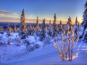 Mountains, winter, sun, Spruces, west