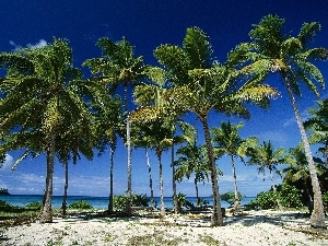 Beaches, Palms