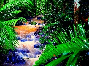 Palms, stream, forest